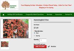 Hummingbird plant @ http://goo.gl/M8eKrP