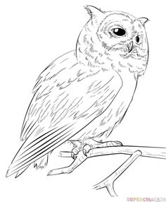 How to draw a realistic owl step by step. Drawing tutorials for kids and beginners.