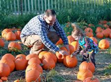 Queens County Farm Museum - PUMPKIN PATCH        Saturdays & Sundays, October 4 – 24, 2014 11 am – 4:30 pm October is pumpkin month at the Farm Museum. Enjoy wandering through the planting fields to find your perfect pumpkin.   Price of pumpkin based on pumpkin size. There is no admission to enter the patch.