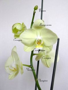 Цветы из холодного фарфора - Страница 5
