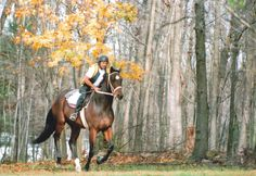 Davy Jones, The Monkees, Horse Racing, Foundation, Horses, Animals, Animales, Animaux, Horse