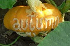 An artistic engraved pumpkin!