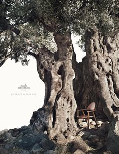 Hermès S/S 2012 Ad Campaign - Photographed by Nathaniel Goldberg on the Greek Island of Aegina. Greek Flowers, Creator Of The Universe, Tree Tunnel, Birds In The Sky, Forest Mountain, Tree Trunks, Parthenon, Tree Forest, Olive Tree