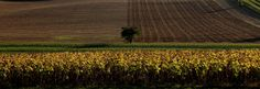 Le Lauragais: Criss and Cross - working the fields