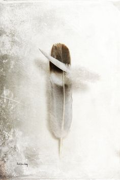 """""""Flying Feathers""""    I walked outside one winter morning and found a bunch of feathers lying on top of the snow. Obviously some birds had been fighting over the bird feeder. I gathered the feathers since I knew that their beauty would inspire me one day to make art. This photo is one in a series that's all about feathers and textures. Enjoy!    The photo is one in a series, but can definitely be a beautiful addition to any home, office or hospitality environment on its own. Contact me for…"""