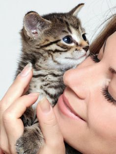 5 Common Pet Health Problems for Kittens