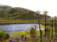 Serrania de Dios - Cundinamarca Colombia South America, Colombia Travel, Flora, Mountains, Columbia, Travelling, Lakes, Gardens, World