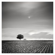 Film Photography, Landscape Photography, Panorama Camera, Museum, France, Champagne, Paradise, Black And White, Gallery