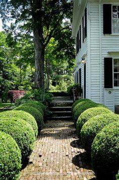 Little red house: love this little brick path. garden сад, с Boxwood Landscaping, Boxwood Garden, Brick Walkway, Brick Path, Front Walkway, Landscape Design, Garden Design, Drought Tolerant Plants, Ikebana