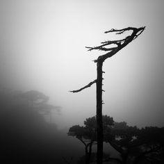 weichuan liu Bare Tree, Im Lost, I Feel Lost