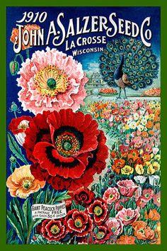 Salzer Seed Co 1910