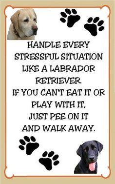 Labrador Retriever Stressful Situation Funny Refridgerator Magnet
