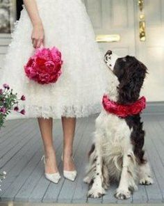#WeddingDog adorable shot. a must for every bride who loves her animals!