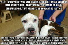 Shocking Cruelty Against a Dog Called Puppy Doe Brings Calls for Change