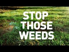 Stop Weeds In Your Lawn.  Learn how with 3 tips in 30 seconds!