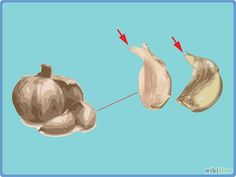 How to Grow Garlic Indoors in a Pot: 15 Steps (with Pictures)