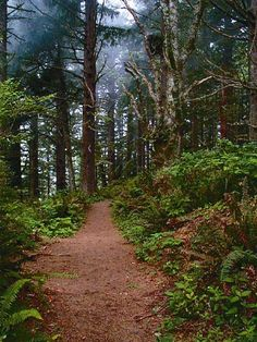 Cape Perpetua Trail near Yachats Oregon