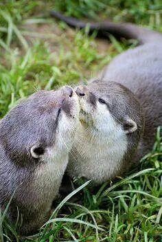 Otterly precious kisses