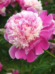 Difícilmente encontraré️️is una flor más bella