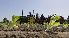 Five dead nearly 200 sick in E. coli outbreak from lettuce. And investigators are stumped.
