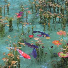 It is real pond, such as like the Claud Monet paintings in Seki, Gifu pref. Not a painting. Gifu, Photowall Ideas, Carpe Koi, Nature Aesthetic, Blue Aesthetic, Art Et Illustration, Claude Monet, Aesthetic Pictures, Belle Photo