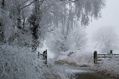 a real winter wonderland