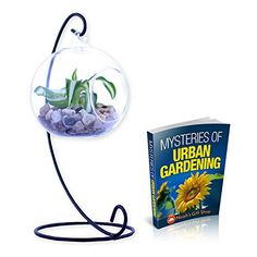 Noahs Clear Glass Globe Hanging Planter Terrarium with Black or White Stand for Indoor and Outdoor Use - Tea Light Candle Potpourri Holder Lantern Ball - Includes Mysteries of Urban Gardening *** Trust me, this is great! Click the image. : home diy yard Diy Gifts For Men, Gift Finder, Garden Accessories, Glass Globe, Hanging Planters, Potpourri, Garden Art, Terrarium, Diy Design