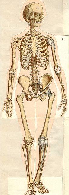 anatom37 2 by pilllpat (agence eureka), via Flickr