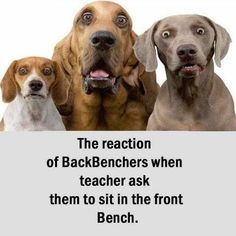 Reaction of back benchers Funny Animals With Captions, Funny Animal Pictures, Funny Photos, Funny Gags, Funny Texts, Funny Jokes, Funny Sarcasm, Mom Funny, Funny Life