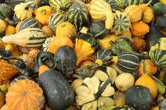 header-autumnsquash-pixabay.jpg (620×413)