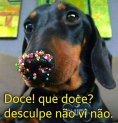 Dachshund meme - doxie and donuts! From View from the Birdhouse: Dear Abby - 15 Dachshund Meme meme - doxie and donuts! From View from the Birdhouse: Dear Abby - 15 Dachshund Memes Dachshund Funny, Dachshund Love, Funny Dogs, Daschund, Dachshund Puppies, Dapple Dachshund, Chihuahua Dogs, Cute Funny Animals, Funny Animal Pictures