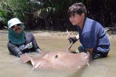 German angler lands Giant freshwater stingray Maeklong River