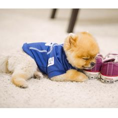 """jiffpom's ways of saying """"I love my new pillow shoes"""""""