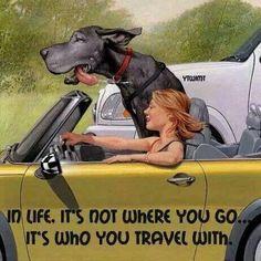 "Discover additional info on ""great dane dog"". Great Dane Dogs, I Love Dogs, Cute Dogs, Great Dane Funny, Great Dane Quotes, Dog Quotes, Animal Quotes, Chien Halloween, Dog Halloween"
