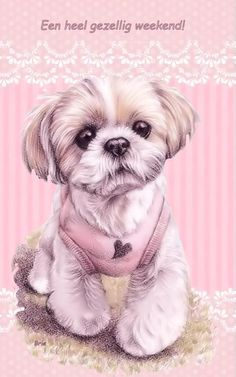 Collection of Shih Tzu Drawing Outline Chien Shih Tzu, Shih Tzu Dog, Shih Tzus, Dog Paw Drawing, Baby Animals, Cute Animals, Paint Your Pet, Animal Books, Lhasa Apso