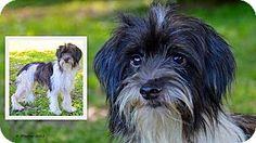 Brooksville, FL - Terrier (Unknown Type, Medium) Mix. Meet Ben a Dog for Adoption.