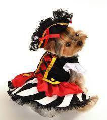 Halloween Dogs #Guardiansbest #Halloween