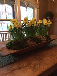 Bulbs and moss in the dough bowl after they bloomed!