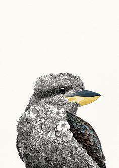 Laughing Kookaburra - Giclée Print – Marini Ferlazzo - Art for Wildlife Australian Animals, Australian Art, Illustrations, Illustration Art, Blue Mountains Australia, Bird Artwork, Sydney, Aboriginal Art, Wildlife Art