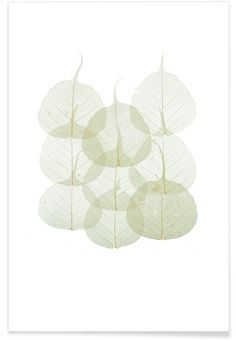 Leaf als Poster von Curious Collections by Mariëlle Leenders Art Mural, Poster Shop, Poster Online, Bedroom Art, Book Cover Design, Plant Leaves, Throw Pillows, Canvas, Plants