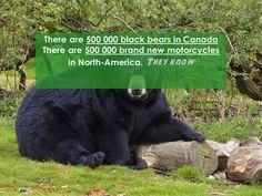 Let's go get everybody a motorcycle this summer. #bikes #bears #canada #wildlife #motorcycle #motorbike