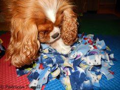 Ella moving the fleece so she can reach a hidden piece of kibble