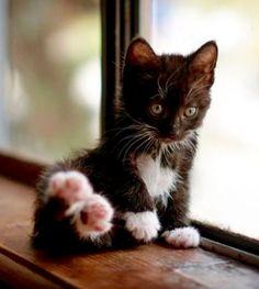 black kitten on a windowsill