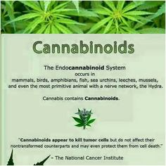 When we make #MEDICINE it is truly for the love of our patients.  If it were up to us  there would be no #cancer  but as it stands  we will provide the tools to fight the good fight.  Thank goodness for #cannabis...and @ncivisualsonline (National Cancer Institute) agrees  #health #healthylife #plantlife #mmj #knowyourmedicine #lifestyle #mmj #marijyana #cannabinoids #endocannabinoid #itsallconnected #fxckcancer #weedstagram #holistic  #wellness #allnatural #high #greenlife #fueledbythc #cbd…