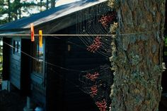 You can repair anything, It seems impossible, but American artist Nina Katchadourian decided to offer the spiders in a Finnish forest some help by mending their broken webs. The contents of her repair kit: red yarn, scissors, tweezers and glue.