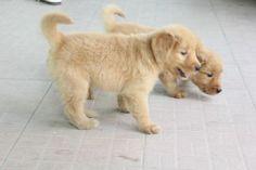 Cách huấn luyện chó đi vệ sinh đúng cách của trung tâm bác sĩ thú y