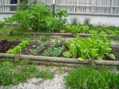 huerto-ecológico-jardinería-alicante.jpg (1024×768)