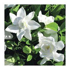 1000 id es sur le th me fleurs tropicales sur pinterest arrangements de fleurs tropicales for Commander fleurs sur internet
