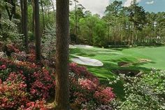Azaleas, pimento cheese sandwiches in green plastic wrap, and Amen Corner.  It doesn't get much better than this.