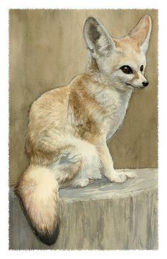Fennec Fox Study by Deirling on deviantART